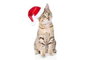 Фото Коты Рождество Шапки Сидящие Белый фон Смотрит Животные
