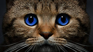 Image Cats Eyes Snout Animals