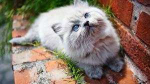 Photo Cats Staring Kitty cat