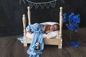 Pictures Cornflowers Teddy bear Bed Baby Sleep Children