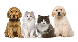 Wallpapers Dogs Cats White background Puppy