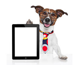Pictures Dogs Tablet PC White background Jack Russell terrier Eyeglasses Necktie Template greeting card Animals