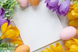 Papéis de parede Páscoa Crocus Cartão do molde Ovo Folha de papel Flores