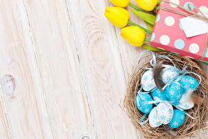 Fotos Ostern Federn Tulpen Bretter Ei Nest