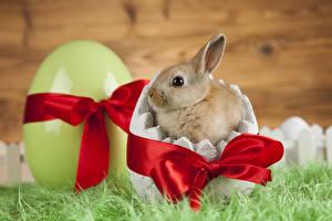 Fotos Ostern Kaninchen Jungtiere Ei Schleife