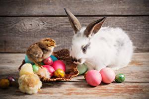 Photo Easter Rabbits Nestling Wood planks Eggs