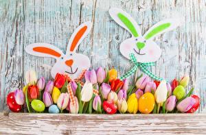 Фотографии Пасха Кролик Тюльпаны Цветы
