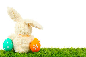 Pictures Easter Rabbits White background Eggs Grass Back view
