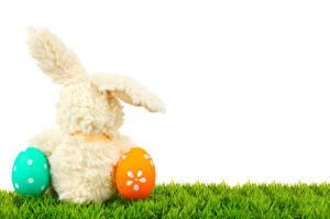 Fotos Ostern Kaninchen Weißer hintergrund Ei Gras Hinten