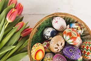 Hintergrundbilder Ostern Tulpen Ei Rot Design Blumen