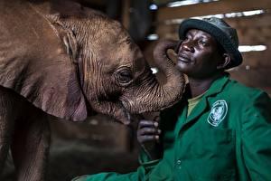 Hintergrundbilder Elefanten Babys Mann Neger Der Hut Tiere