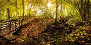 Image Finland Parks Autumn Bridge Stones Trees Leaf Teijo National Park Nature