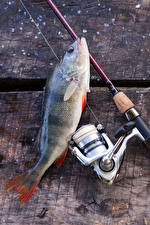 Wallpaper Fishing Fish - Food Fishing rod Sport