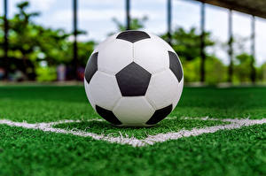 Images Footbal Lawn Ball Sport