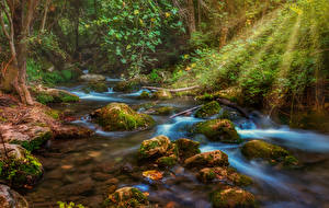 Pictures Forests Stones Stream Rays of light Moss Nature