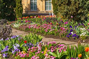 Bilder Deutschland Parks Gänseblümchen Tulpen Muttergottesschuh Karlsruhe Natur