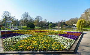 Fondos de Pantalla Alemania Parque Estanque Césped Botanischer Garten Karlsruhe
