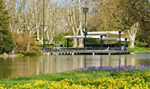 Fondos de Pantalla Alemania Parque Estanque Primavera Narcissus Karlsruhe
