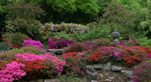 Wallpaper Germany Parks Rhododendron Stones Shrubs Karlsruhe Nature