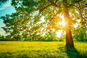 Hintergrundbilder Gras Bäume Lichtstrahl