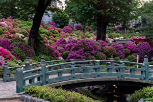 Wallpaper Japan Kyoto Parks Bridges Shrubs Nature