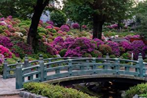 Fondos de Pantalla Japón Kioto Parque Puentes Arbusto
