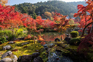 Wallpaper Japan Kyoto Parks Rivers Trees Nature