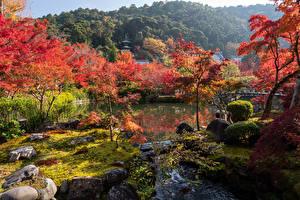 デスクトップの壁紙、、日本、京都市、公園、川、木、自然