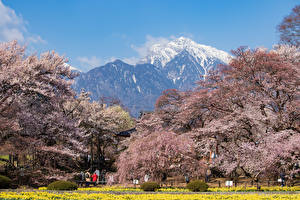 Images Japan Parks Mountains Flowering trees Hokuto Yamanashi Prefecture Nature