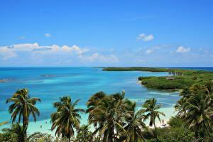 Fotos Mexiko Küste Meer Palmengewächse Cancun
