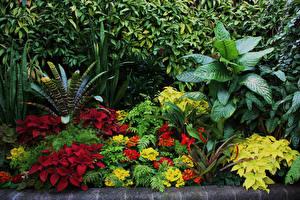 Desktop hintergrundbilder Neuseeland Garten Buntnesseln Trompetenblumen Strauch Blattwerk Wellington Botanical Garden Natur