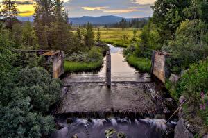 Fondos de Pantalla Noruega Ríos Arbusto Picea Innbygda Hedmark Fylke Naturaleza