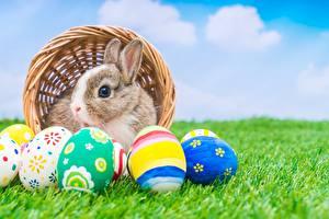 Fotos Kaninchen Ostern Ei Gras Tiere