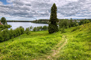 Bilder Russland Flusse Gras Fichten Strauch Weg Star. Sloboda Leningrad Oblast