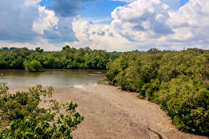 Wallpaper Singapore Parks Lake Forests Sand Sungei Buloh