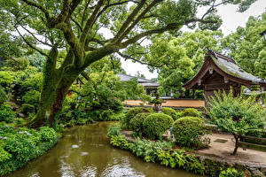Fondos de Pantalla Singapur Parque Estanque árboles Arbusto Naturaleza