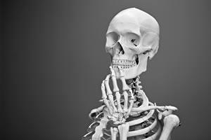 Bilder Cranium Skelett Hand Grauer Hintergrund