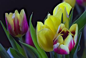 Fotos Tulpen Großansicht Blüte