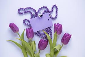 Fotos Tulpen Schmuck Farbigen hintergrund Vorlage Grußkarte Ring Violett Blumen