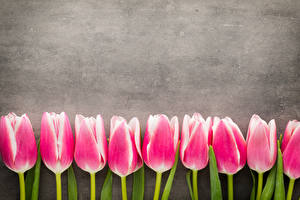 Photo Tulips Pink color Flowers