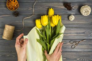 Photo Tulips Yellow Hands Boards Flowers