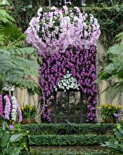 壁纸、、アメリカ合衆国、ガーデン、ラン科、扉、Longwood Gardens、自然