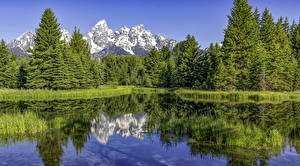 Picture USA Park Lake Mountain Forests Spruce Grand Teton National Park Nature