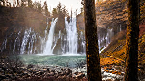 Pictures USA Waterfalls Autumn California Rock Trunk tree McArthur-Burney Falls Memorial State Park Nature