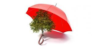 Bilder Regenschirm Bäume Weißer hintergrund 3D-Grafik
