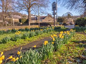 Fotos Vereinigtes Königreich Gebäude Frühling Narzissen Stadtstraße Baslow Derbyshire Städte