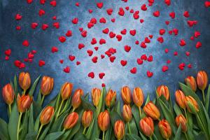 Hintergrundbilder Valentinstag Tulpen Herz Blumen