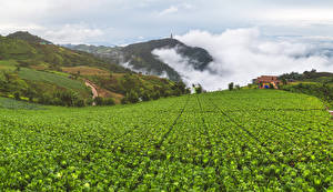 Bilder Vietnam Acker Haus Hügel Dampf Mu Cang Chai Natur