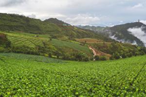 Bilder Vietnam Felder Hügel Mu Cang Chai Natur