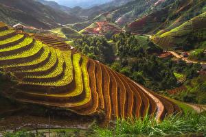 Fotos Vietnam Acker Hügel Mu Cang Chai Natur
